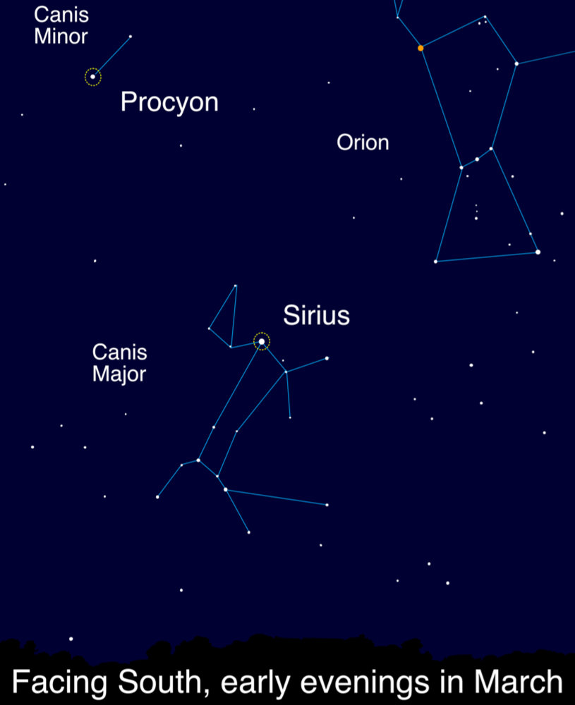 Illustration of the locations of Procyon and Sirius as seen, looking south, during March evenings